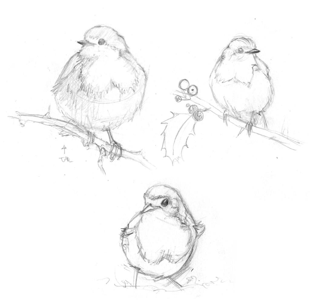 Bird sketches: Robins