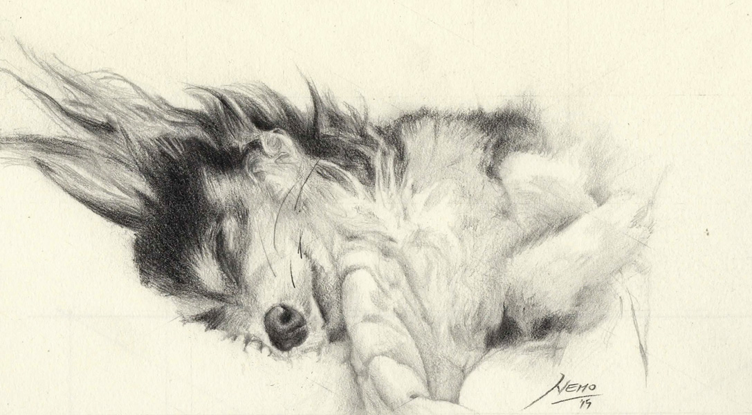 Sleeping Dog Pencil Sketch