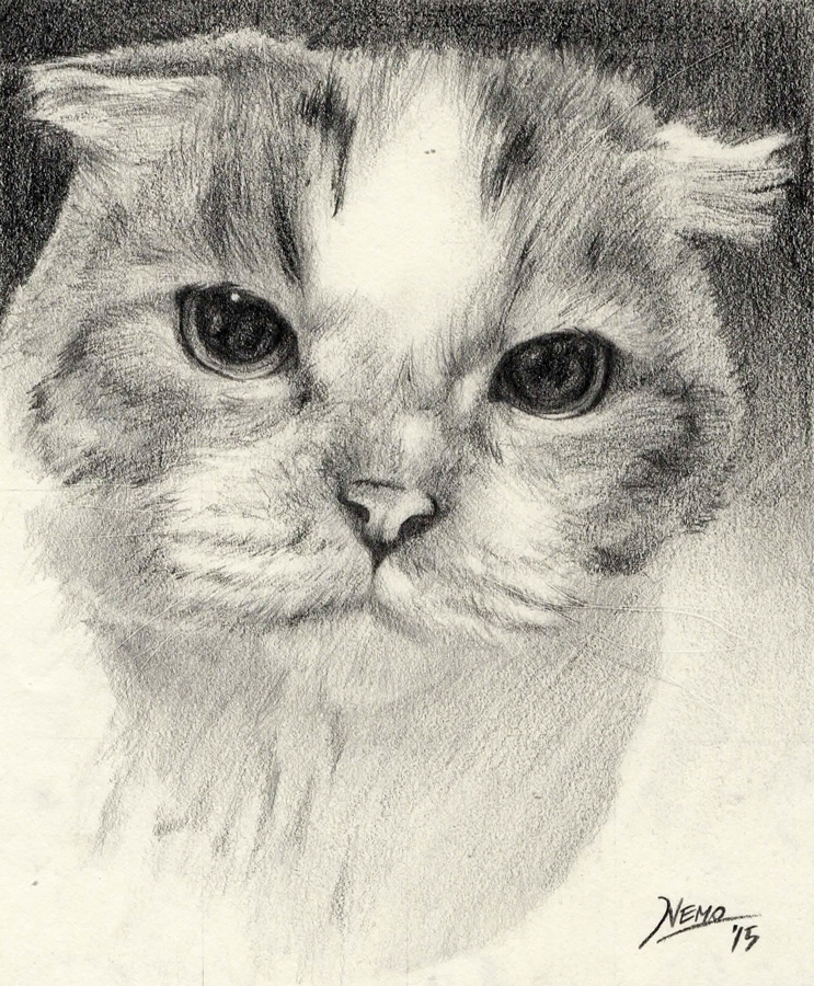 Pencil Sketch of a cat - Chibi