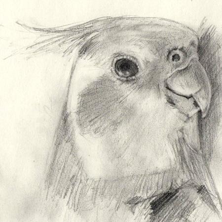 pencil sketch of a bird