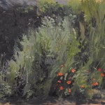 Sicilian Weeds - Poppies - Plein Air
