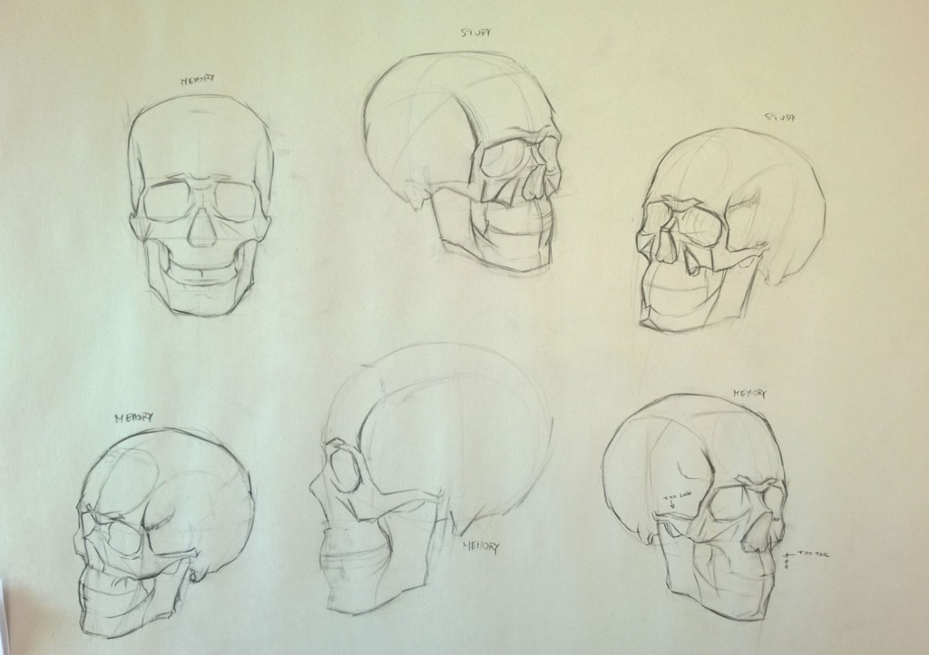 Skull construction Drawings